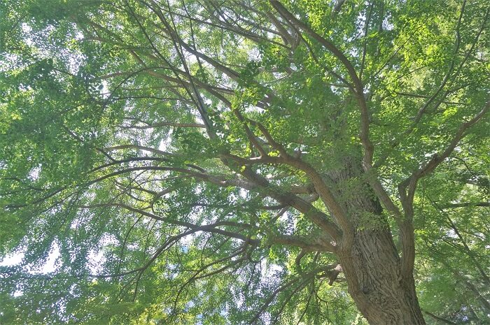 大きな木の下で。