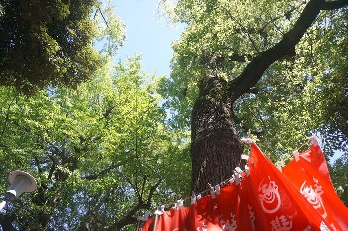豊川稲荷で空を見上げると緑がキラキラ光っていた。