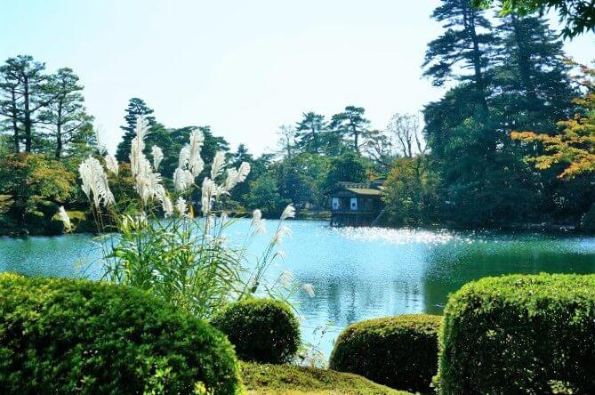 兼六園のススキ越しの池の風景。
