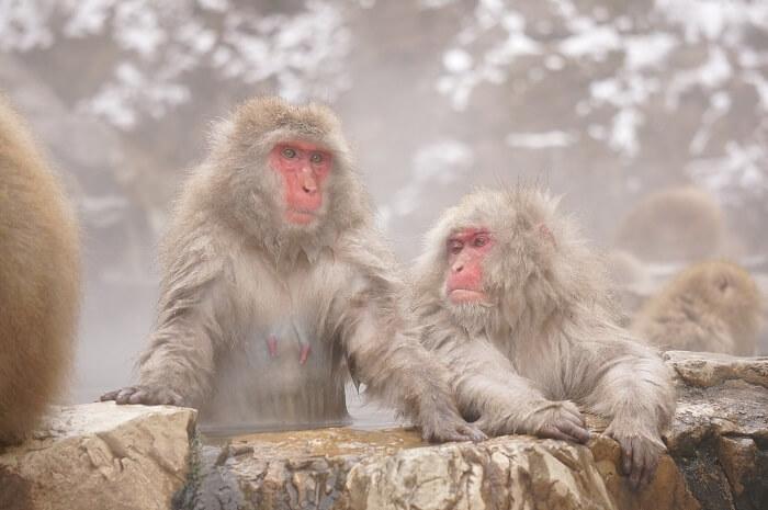 温泉に入る猿たちがかわいすぎ!