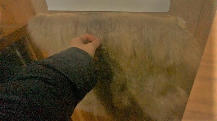 ニホンザルの毛皮に触ってみることもできます!