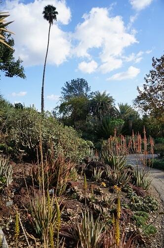 迷子になった植物園の砂漠エリア(Desert Garden)のサボテン|アメリカの大富豪の邸宅は桁違いのスケールだった…!華麗なるハンティントン・ライブラリー