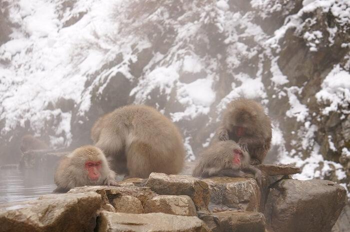 あったかそうな温泉につかる猿たち。
