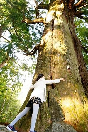 夫婦杉が大きくてびっくり