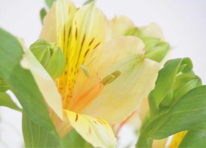 今週届いたお花の種類は?花言葉を読み解いて送り手の気持ちを読む楽しみも!