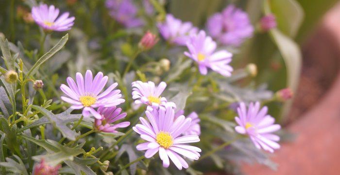 自粛の中でも花は美しく咲く。