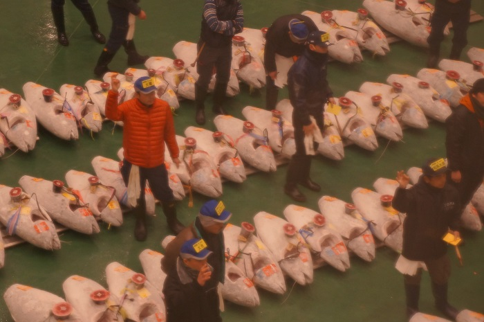 豊洲市場のマグロのせり見学で手やりを見る!