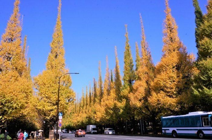 秋は紅葉の名所としても知られる外苑前。