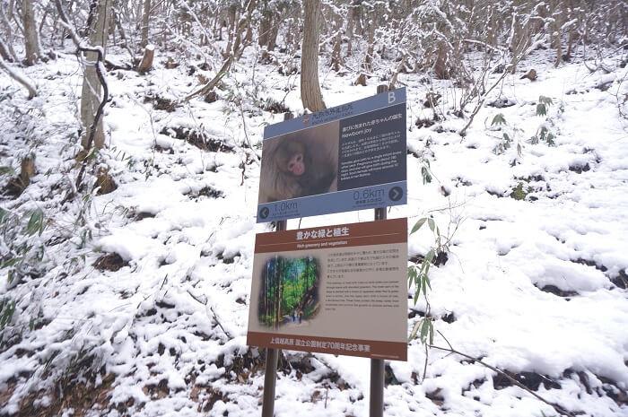 歩いても、歩いても…。冬のSnow Monkey Parkへでかけよう。